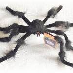 Örümcek Halloween dekor